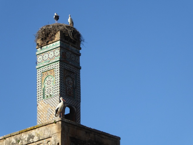 minaretstorks